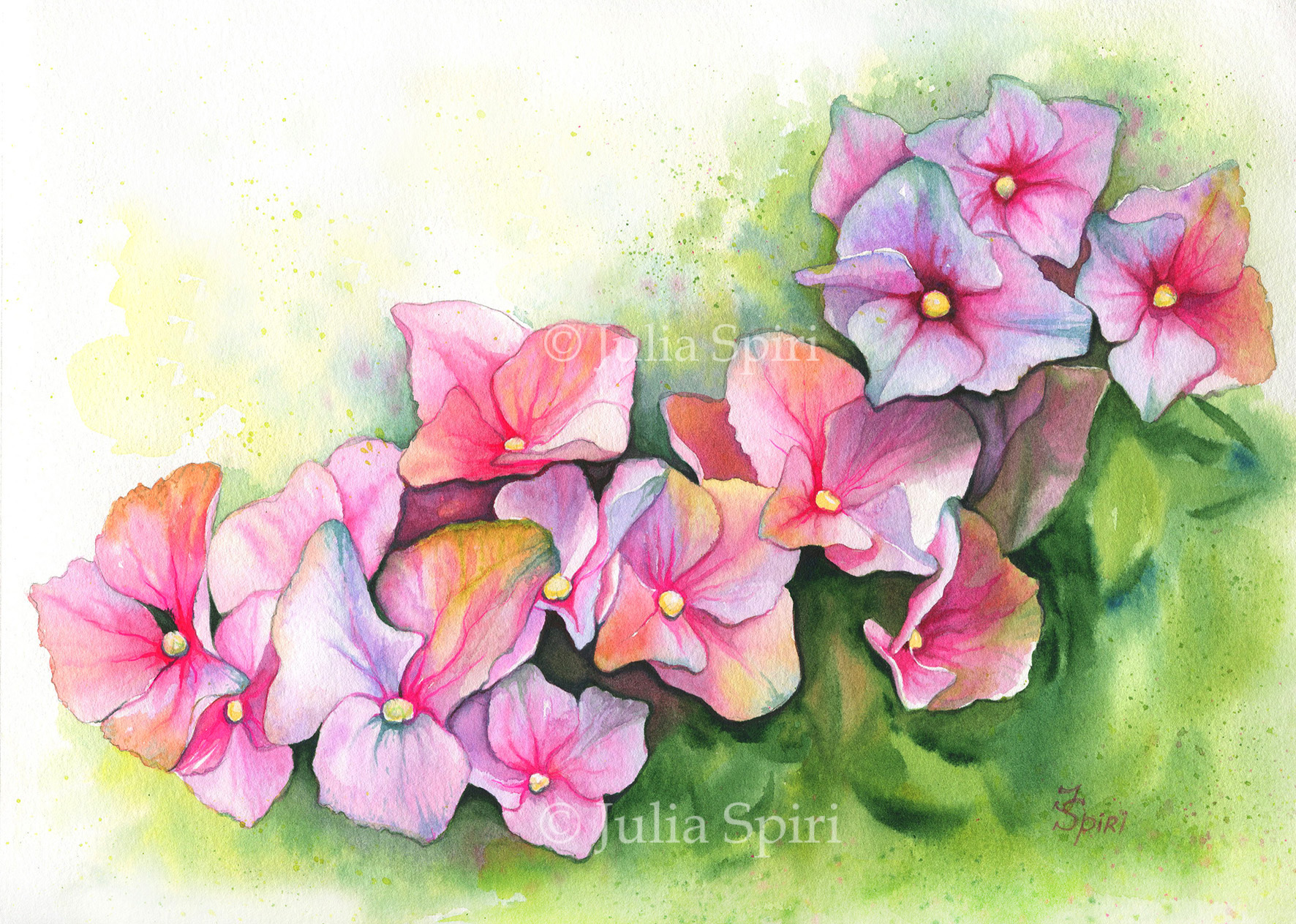 Hydrangea Flowers The Art Of Julia Spiri